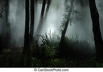 tropical forest covered with white fog