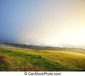 Fog in meadow