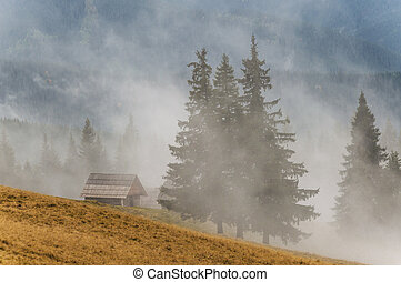 Fog in mountain forest