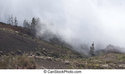 Fog in mountains, Tenerife - Landscape in mountain forest