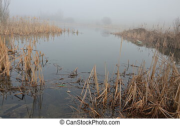 fog in nature - this winter without snow and this poddle and...