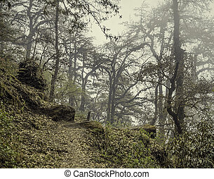 Fog in old mystical forest