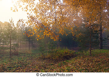Fog in the autumn forest at sunrise, autumn background
