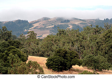 fog in the foothills
