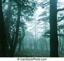 Fog in the forest - Magic misty forest