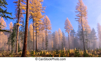 Fog in the forest on clear sky