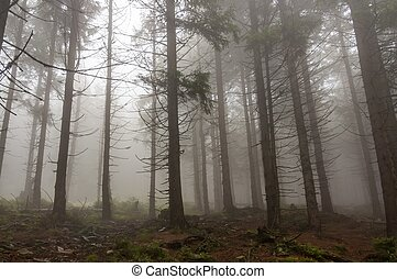Fog in the haunted forest
