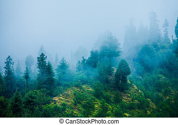 Fog in the morning forest