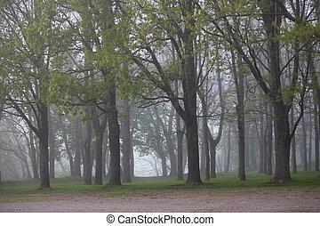 Fog in the Park