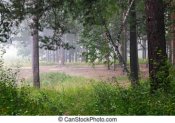 Fog in the summer forest
