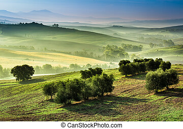 Fog in the valley at sunrise, Tuscany