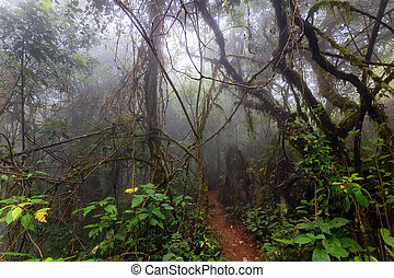 Fog in tropical jungle
