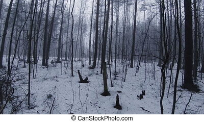 Fog in winter forest.