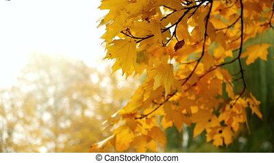 Fog leaves autumn branch