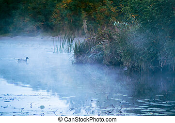 fog on an autumn river with green forest