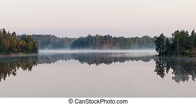 fog on forest lake