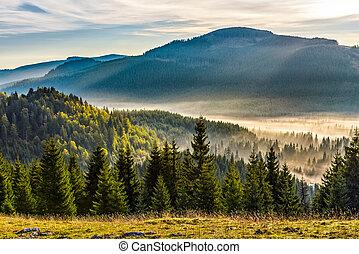 fog on hot sunrise in forest - cold morning fog on hot...