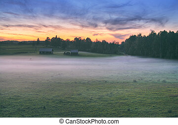 Fog on the field at the forest at sunset
