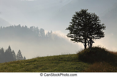 Fog on the field with mountain in background