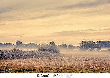 Fog over a countryside landscape