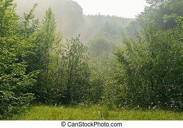 fog over morning forest