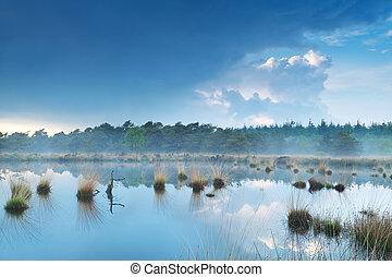 fog over swamp by forest, Fochteloerveen, Drenthe,...