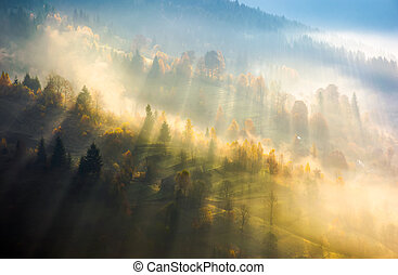 fog over the forest in morning light. beautiful nature...