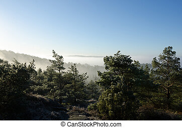 fog over the valley in the early morning