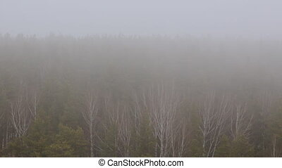 Fog over trees in forest
