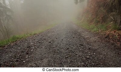 Fog road in the mountain forest