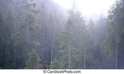Fog smoke mountain forest - Spectral mists move fluidly...