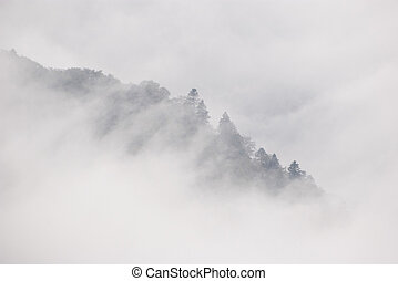 Fog - The edge of a forest cutting over the thick cloud of ...