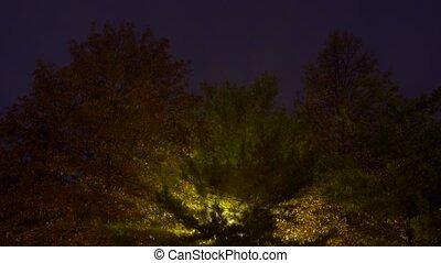 fog tree lamp night