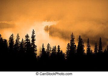 Fog, Warm Sunlight and Pine Trees