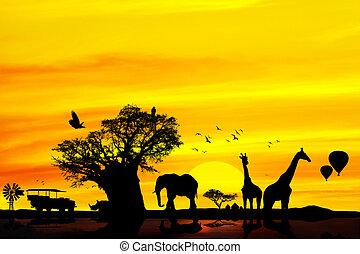 fogalmi, afrikai, szafari, backround.
