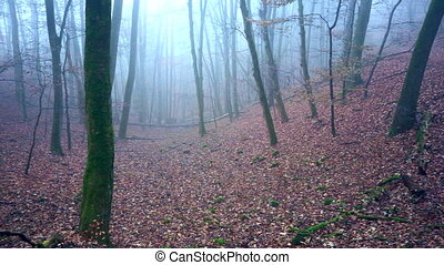 Foggy Autumn Forest - Foggy autumn forest with orange leaves...