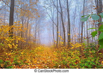 foggy autumn landscape in the forest
