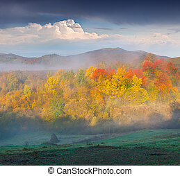 Foggy autumn landscape in the mountains