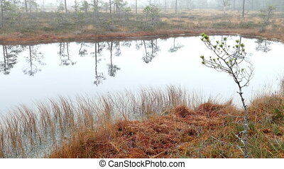 Small bog lake - Foggy day in Small bog lake in national...