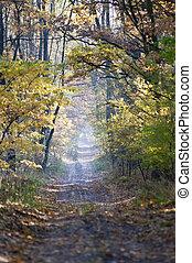 Foggy dirt road at fall