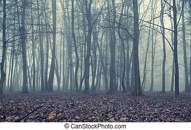 Foggy evening in the old forest