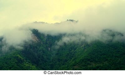 Foggy evergreen forest on the mountain slope - Footage of...