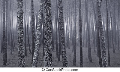 Foggy forest at dusk