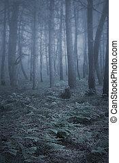 Foggy forest ferns