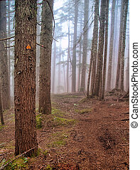 Foggy Forest Hiking Trail Marker