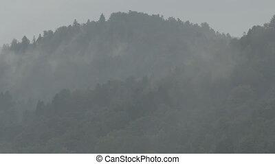 Foggy forest hills of Bieszczady Mo