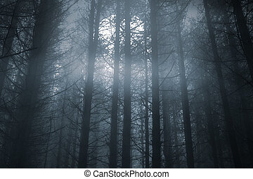 Foggy forest in a full moon night