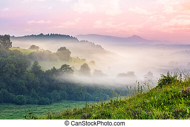 foggy forest in mountain valley at sunrise