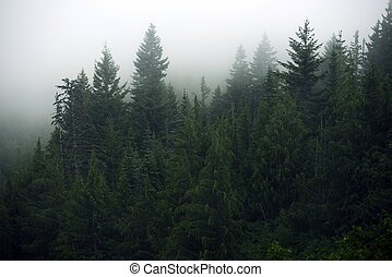 Foggy Forest - Olympic Mountains, Washington State, USA....