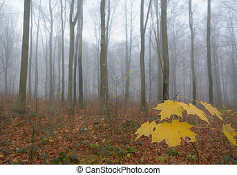 Foggy forest on autumn morning